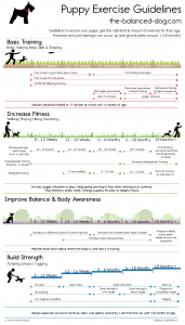 puppy exercise guidelines, puppy exercise chart